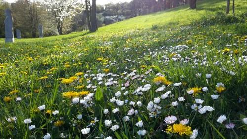 Jetzt ist der Frühling wirklich da :-)