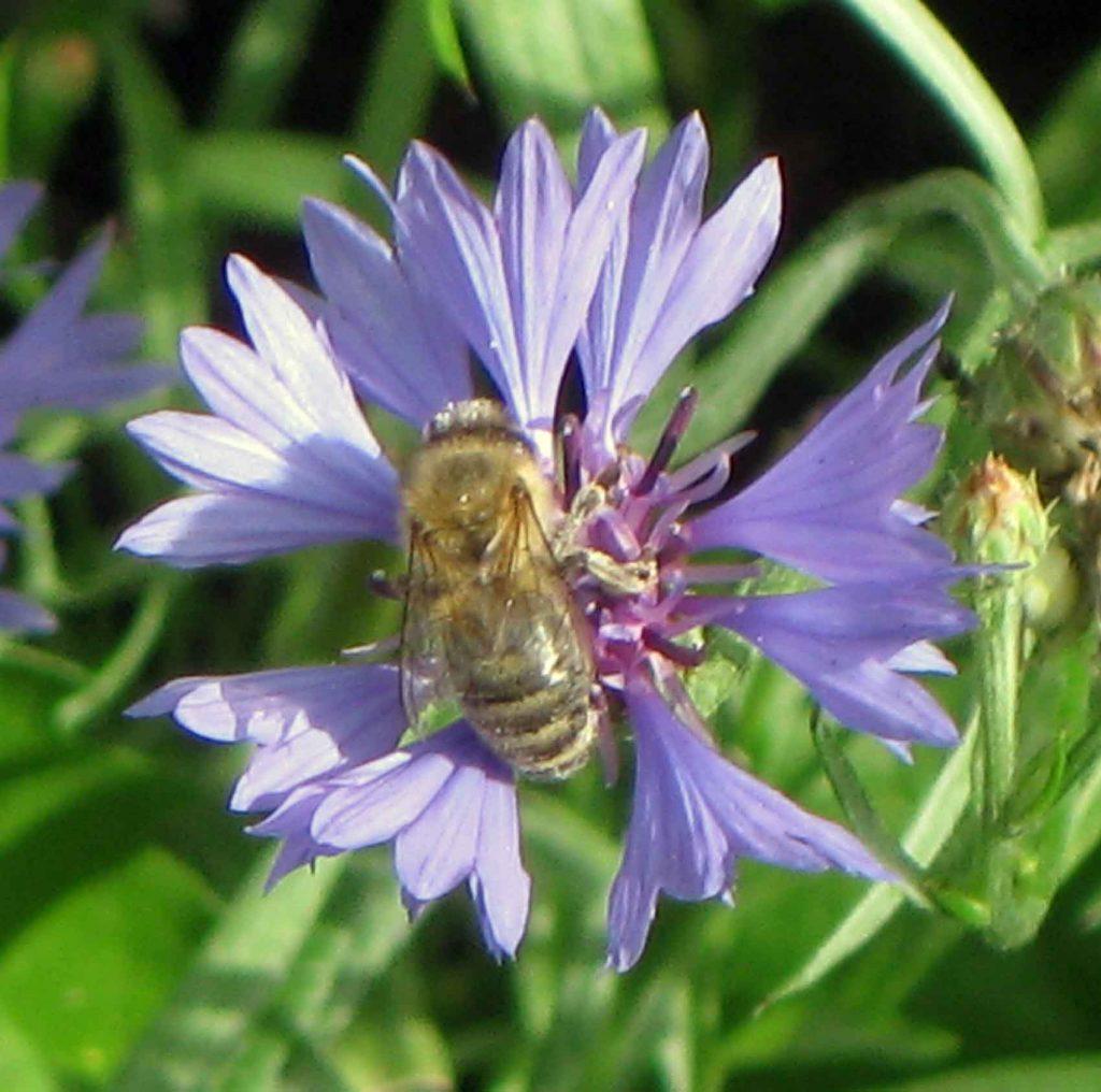 Für die leiben Bienchen ist auch mit Speise und sogar Trank gesorgt.